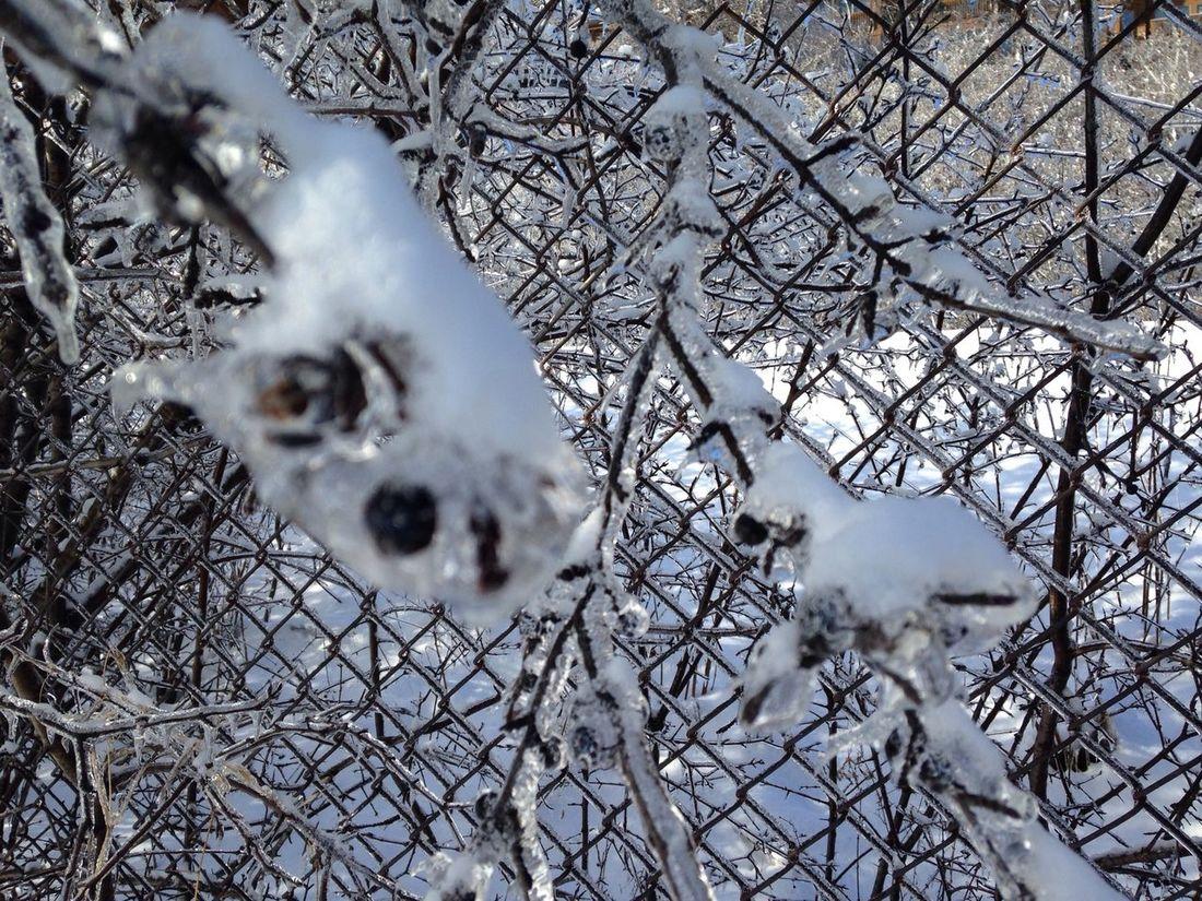#trees #frozen #winter Fence