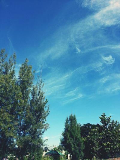 No People The Butterfly Sky Tree Trunk School EyeEm