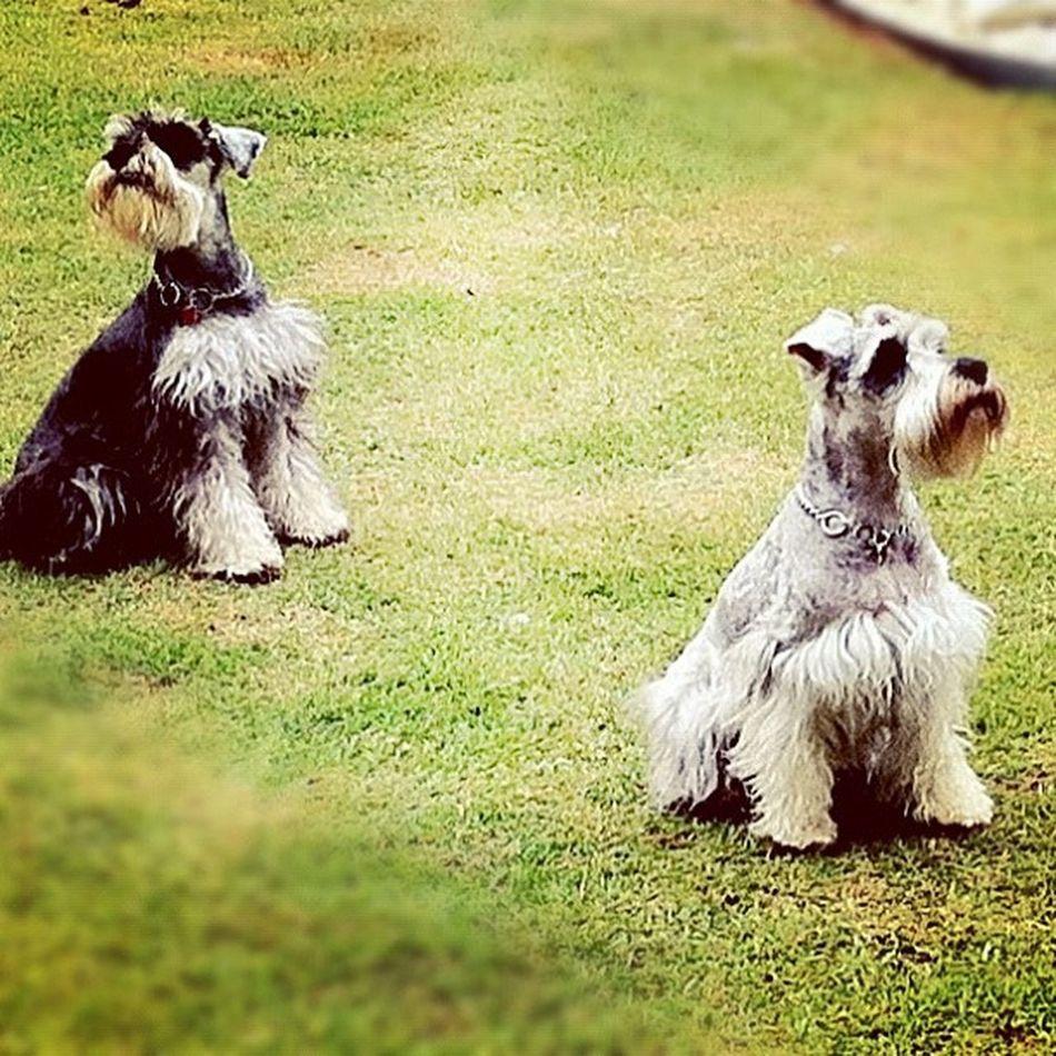 Instajogo Jogo23 Fixgram Instagram iphone4 picoftheday picoftheday popular iphoneonly photografy goiania brasil dogs