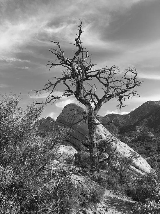 A gnarled tree amid the rock formations of Devil's Punchbowl County Park near Palmdale, California Trees And Sky Blackandwhite Black & White Black And White Photography Landscape_photography Landscape_Collection Trees Mountains Desert CaliforniadesertMojaveDesert Devils Punch Bowl Pearblossom, Ca Palmdale California SoCal Cali Silhouette California Love