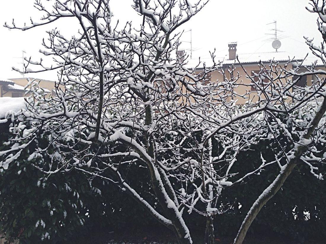 Deepfreeze Garden Snow Christmas Italy Trees Cold