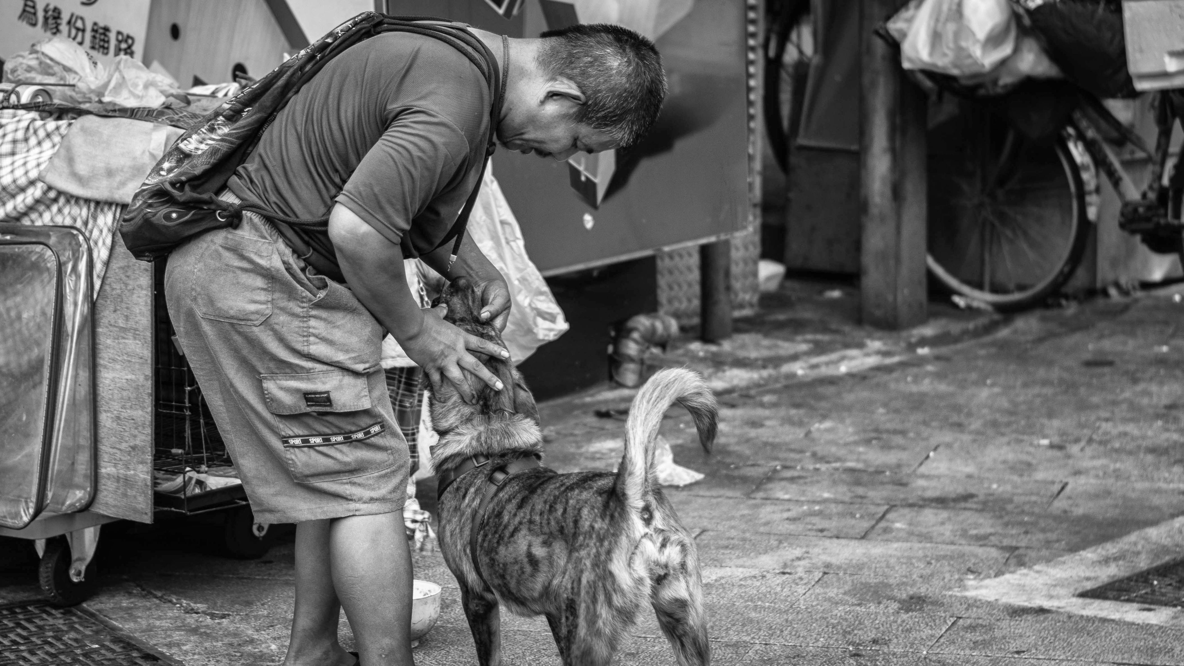 animal themes, domestic animals, men, mammal, one animal, full length, building exterior, livestock, built structure, standing, casual clothing, architecture, lifestyles, outdoors, street, day, rear view, two animals