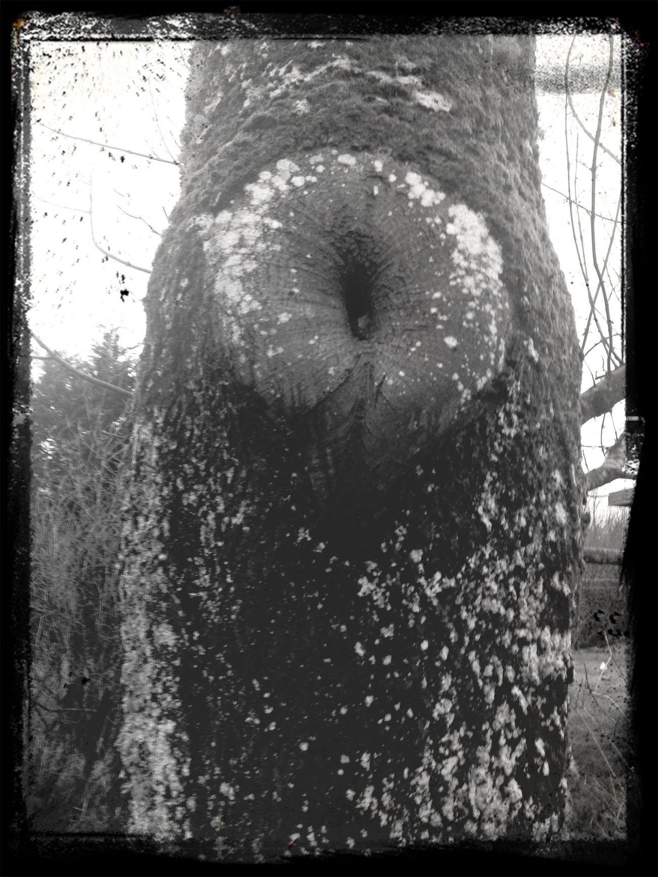 Naturefun Hmmm...