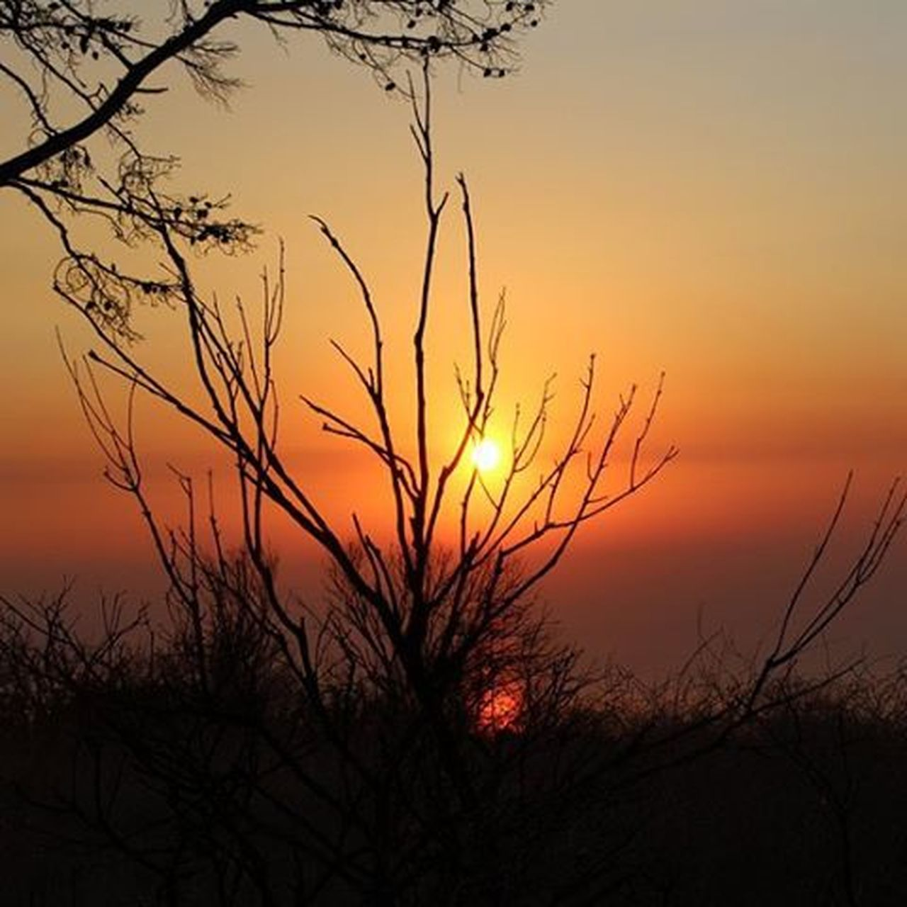 sunset, tree, nature, scenics, silhouette, sky, vibrant color, orange color, outdoors, dusk, tranquil scene, multi colored, landscape, beauty in nature, sun, plant, travel destinations, no people, sunlight, beauty, morning, travel, backgrounds, tranquility, bare tree, rural scene, desert, sea, saturated color, branch