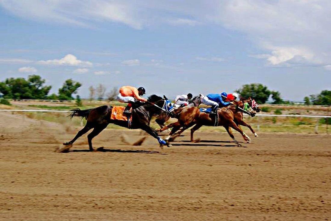 Horse Photography  Horserace Horse Riding Jockey Horseracing Horseraceing Oldpicture Taking Photos MyPhotography Horse Life Races Enjoying Life Photofreak