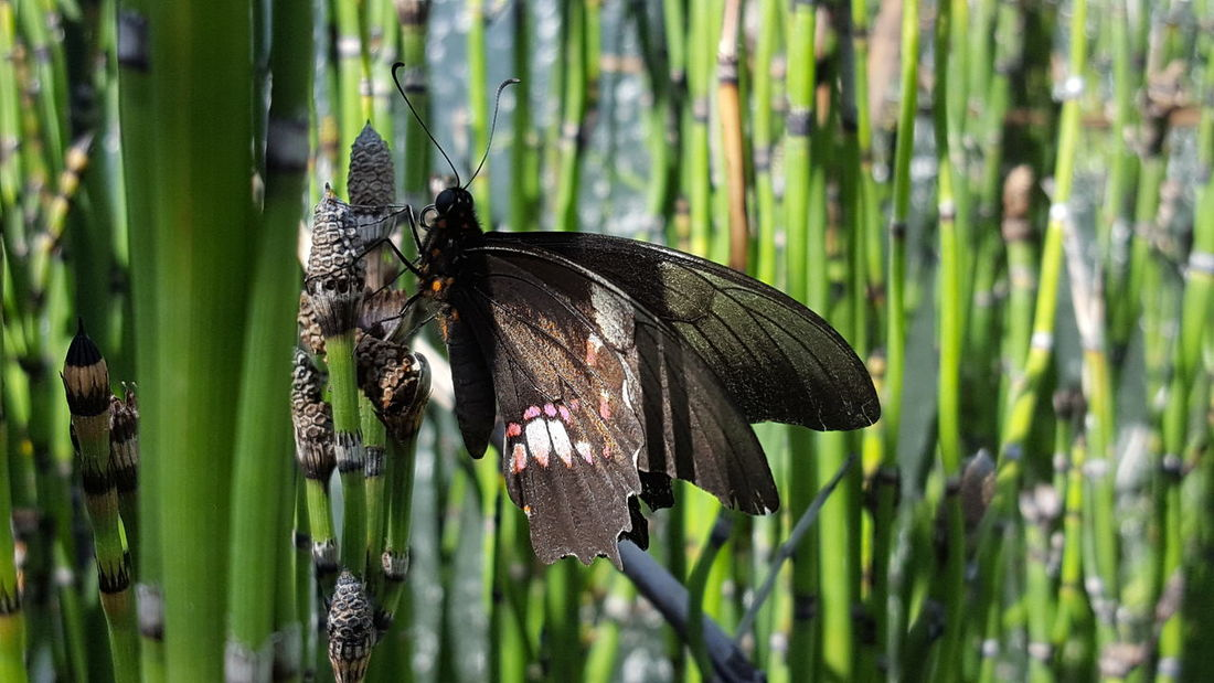 One Animal Insect Animal Themes Animals In The Wild Animal Wildlife Butterfly - Insect Focus On Foreground Nature No People Day Green Color Outdoors Plant Growth Close-up Fragility Beauty In Nature Flower Perching Freshness