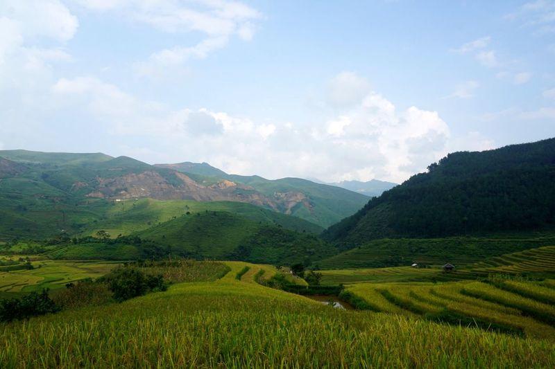 Mu Cang Chai , Vietnam . Mucangchai Vietnam Travel Photography Farmland EyeEm Vietnam