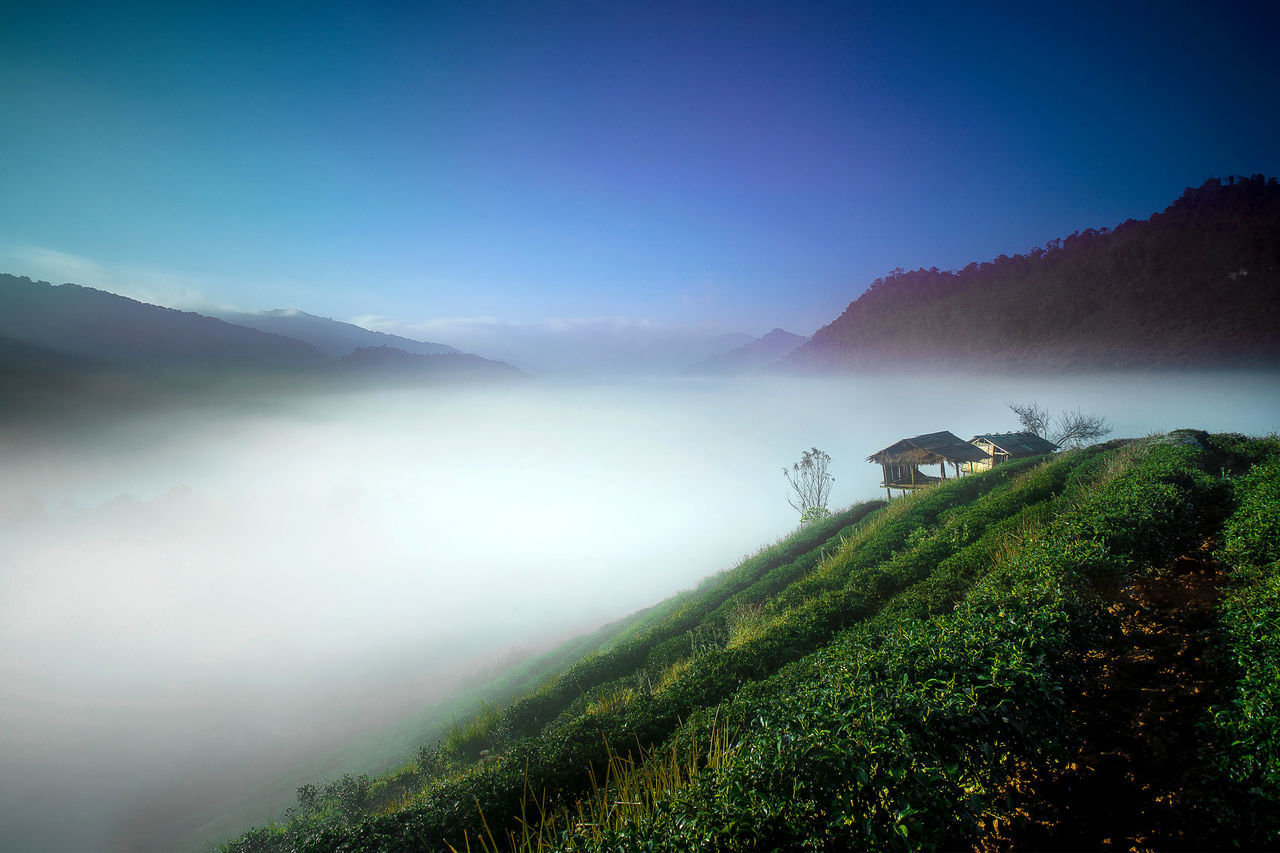 mountain, tranquil scene, nature, tranquility, beauty in nature, scenics, fog, landscape, idyllic, outdoors, mist, no people, mountain range, tree, sky, lake, day, plant, hazy, blue, growth, grass, water, tea crop