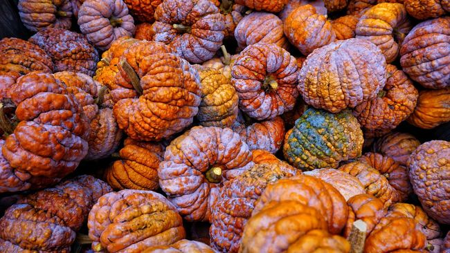 Food Freshness Market Color And Patterns Color Palette Colors Of Autumn Autumn🍁🍁🍁Kürbisse