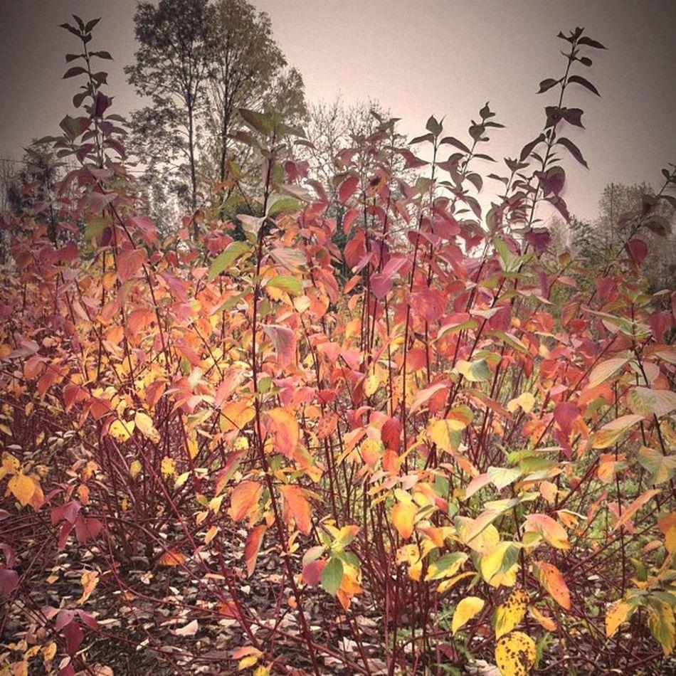 Igf_automne_chalampé , Couleur d'automne!