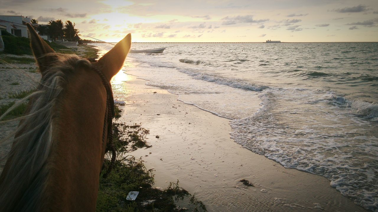 Progreso,Mexico Horse Horse Riding MyfirstEyemphoto Mexico Yucatan Mexico Beach Beachphotography Animal Themes First Eyeem Photo