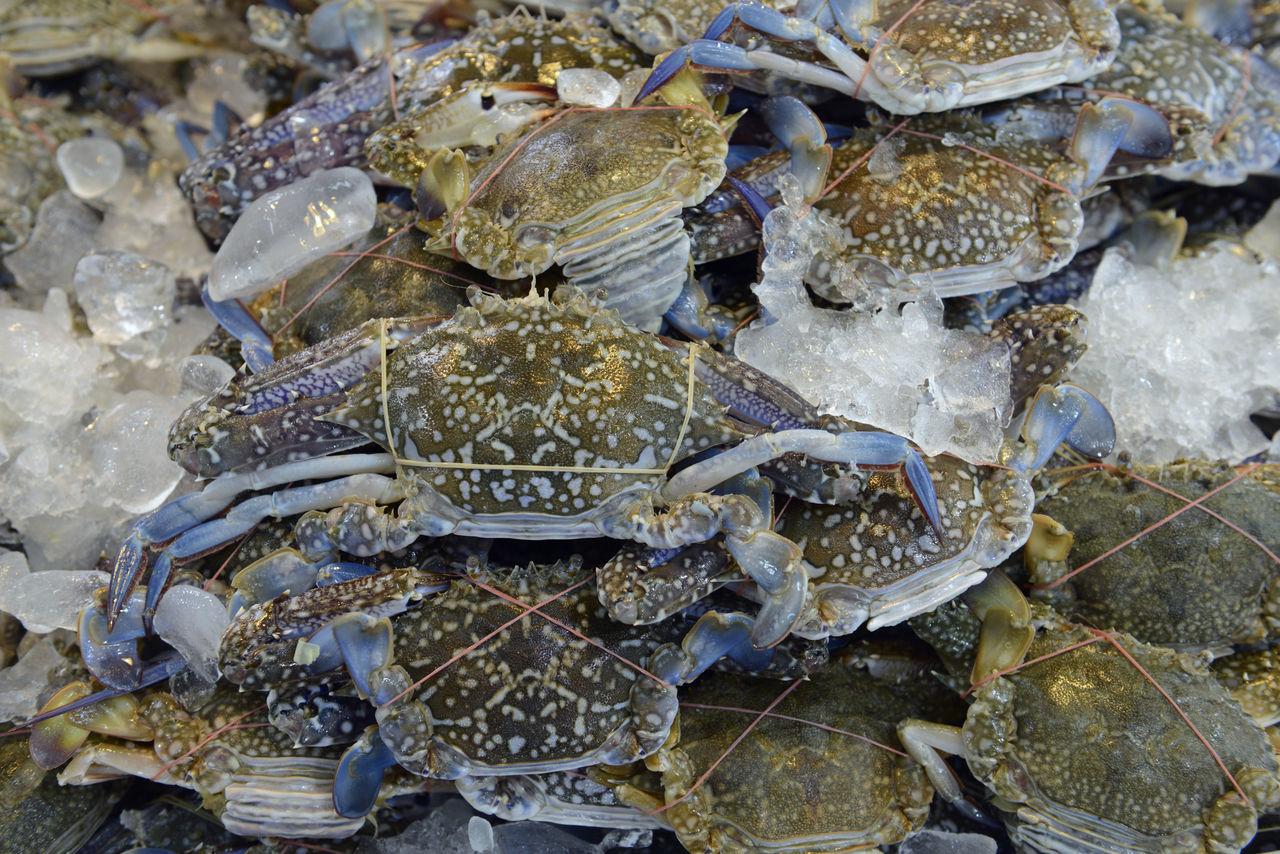 Full Frame Shot Of Crabs On Ice
