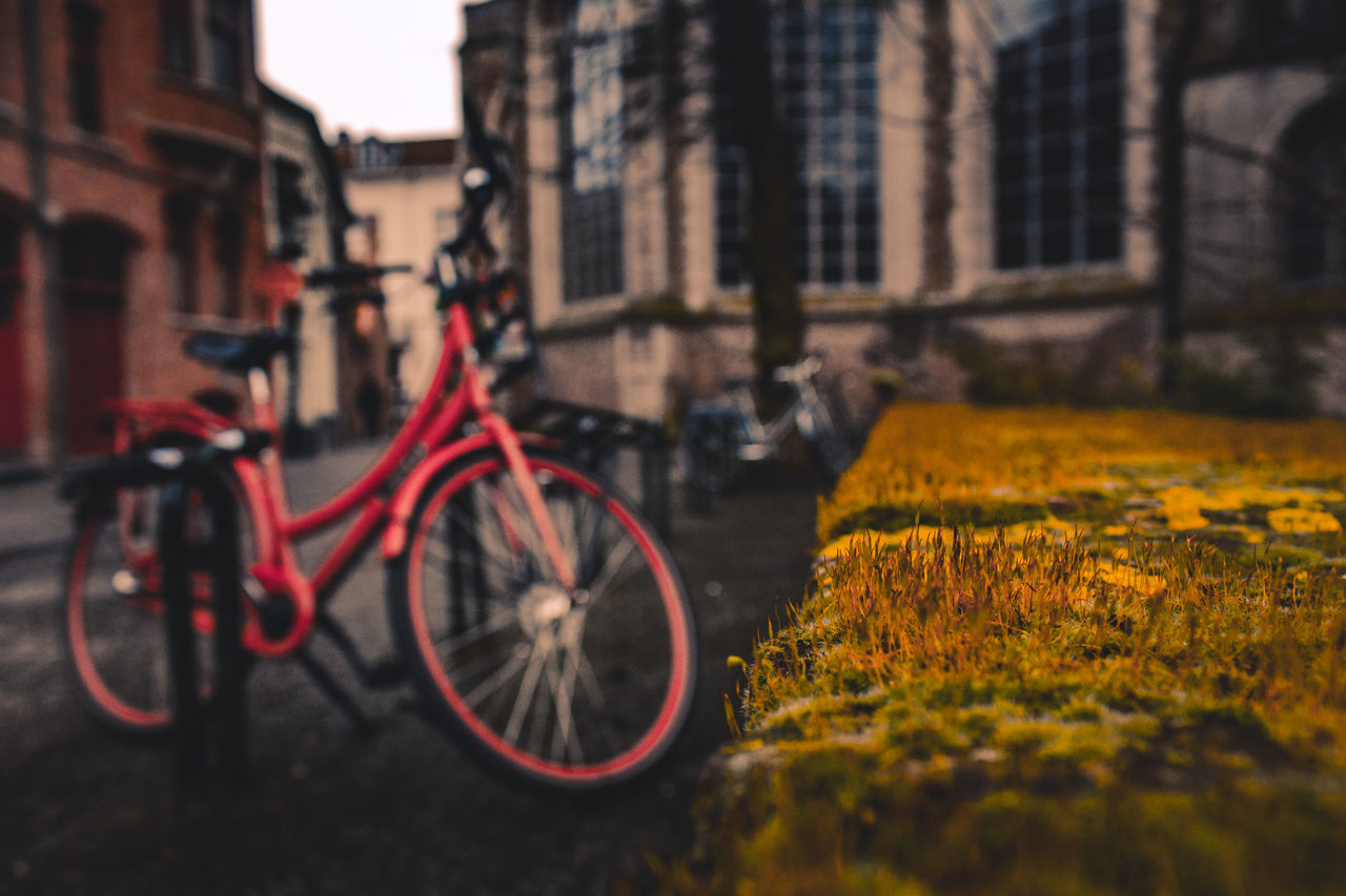 Bike Grass City Bicycle No People Architecture Built Structure Building Exterior Outdoors Close-up Day Traveling EyeEm Best Shots EyeEm Best Edits EyeEm Gallery Beauty In Nature Eye4photography  Nature City Europe Italy Moss Shallow Depth Of Field