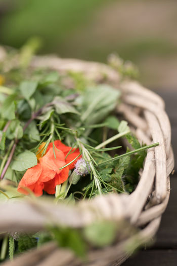 wild herbs in a wooden basket placed outside on a table out of dark wood daylight photography Basil Edible Flowers Green Herb Herbs StillLife StillLifePhotography Basket Beauty In Nature Blossom Close-up Daylight Photography Edible  Flower Freshness Growth Nature No People Outdoors Plant Rosmarin Wild Herbs