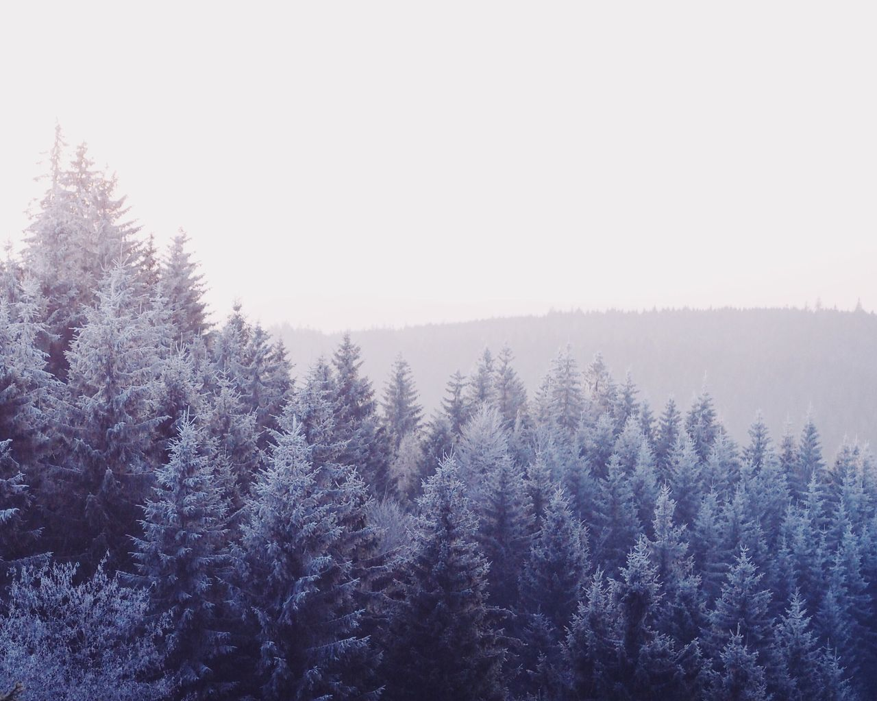 Snow Tree Winter Nature Forest Cold Temperature Scenics Landscape Beauty In Nature Tranquil Scene Outdoors Snowing Coniferous Tree Freshness Day