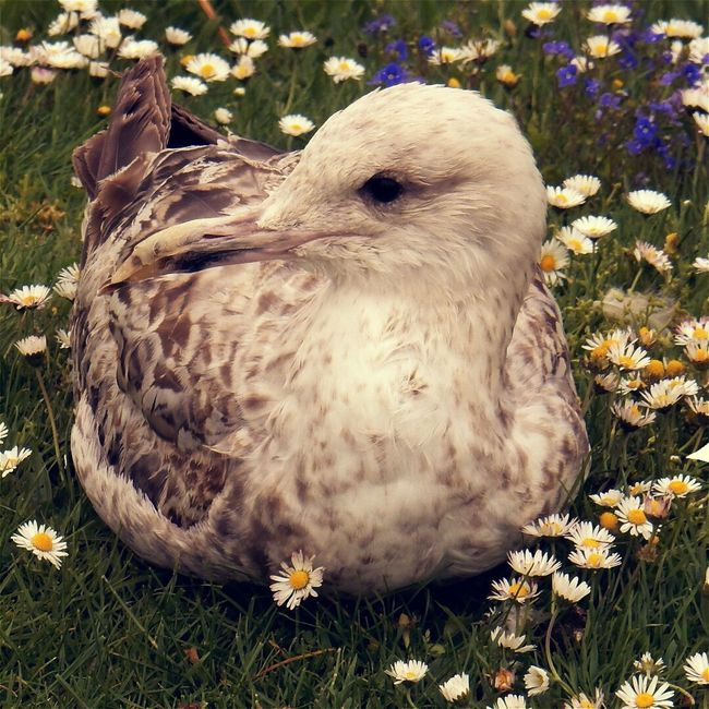 Nature's Diversities Gull Flowers Hanging Out Taking Photos Check This Out Hello World Relaxing Enjoying Life Modern Art Today's Hot Look Beautiful Magical Amazing