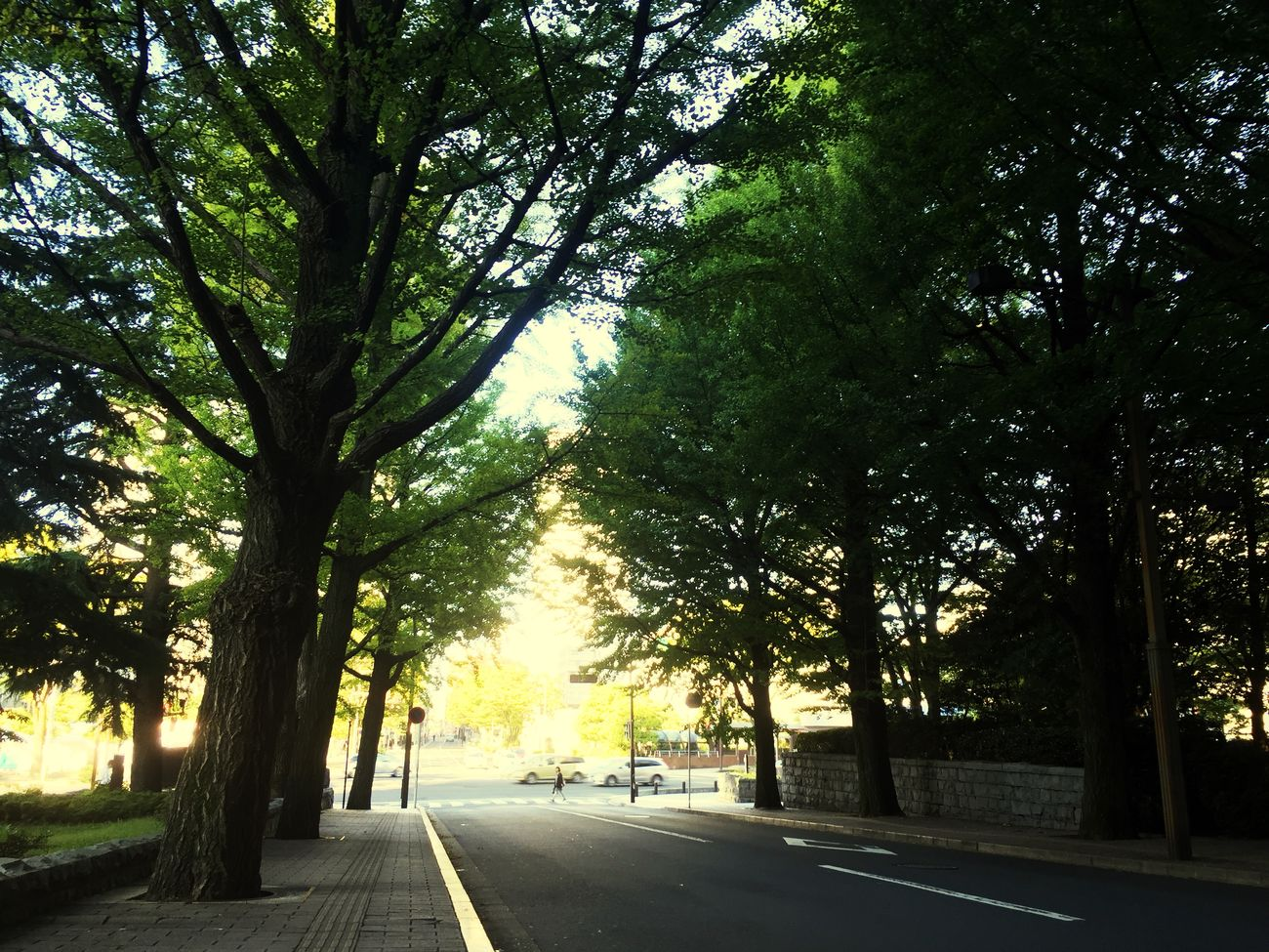 Streetphotography Morning 朝の県庁前