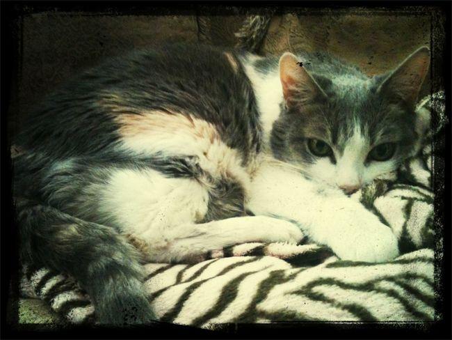 Miss My Baby...