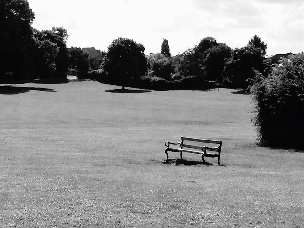 The bench Chair Tree Nature Outdoors Empty No People Day Sky Beauty In Nature Bench Parkland Park Grass Grassland EyeEm Green Beauty In Nature
