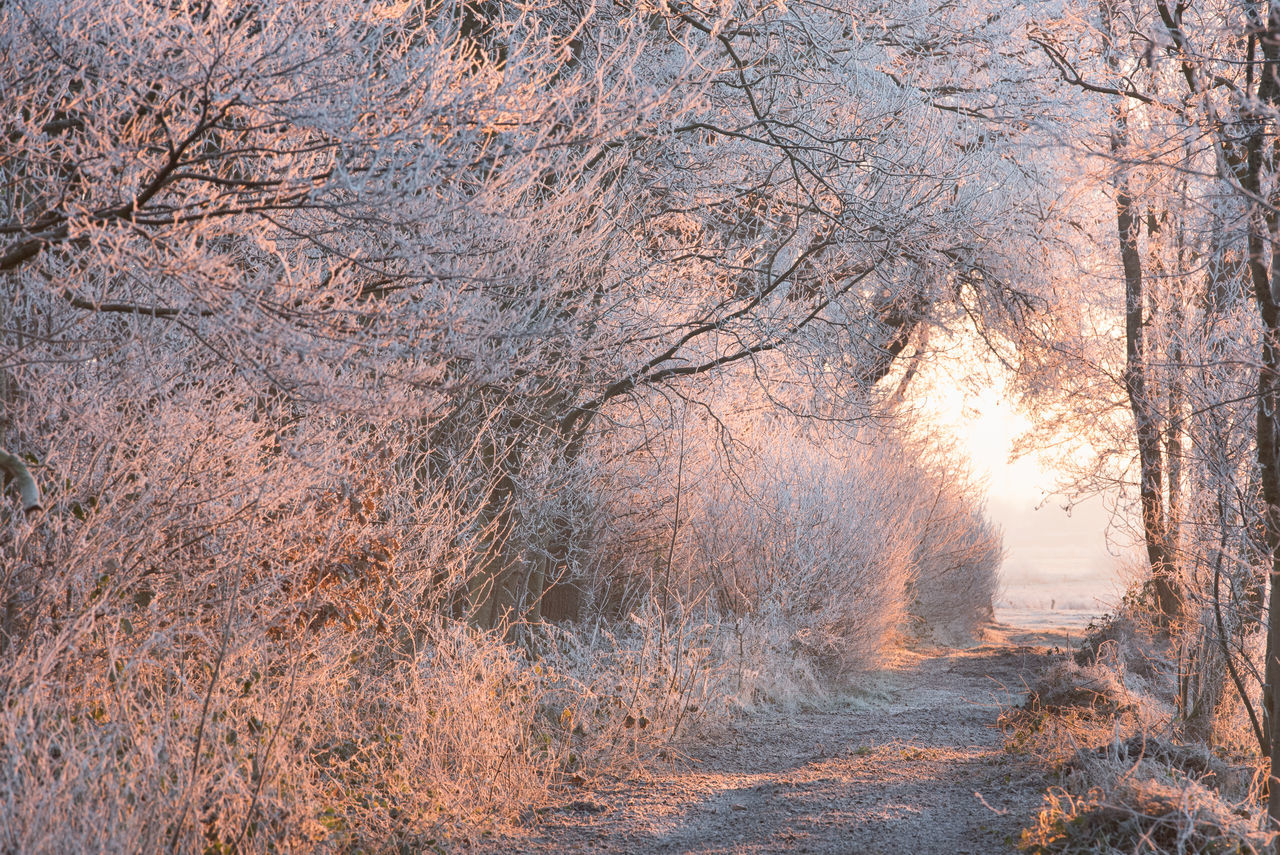 Winter in Ostfriesland Frozen Morning Nature No People Outdoors Scenics Sundawn Tree White Frost Winter