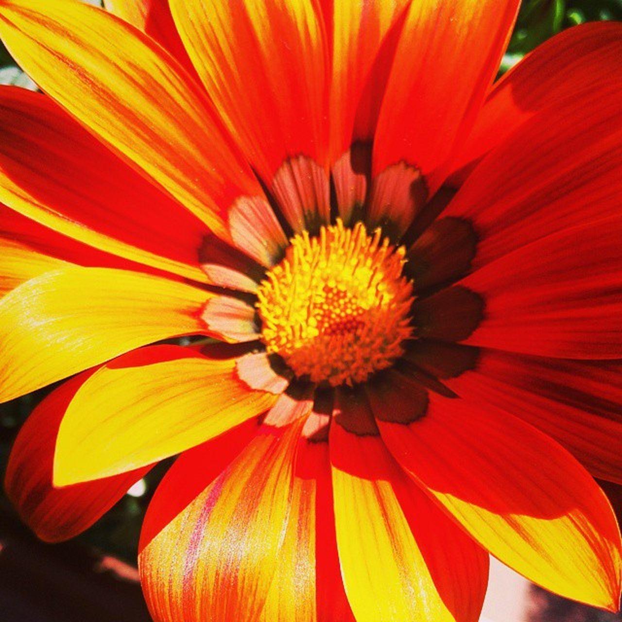 Flowers , Ig_outkast , Petals , Ptk_flowers world_shotz , plants, blossom, instanatura , flowerstagram, flowersofinstagram, flowerstyles_gf, flowerslovers, flowerporn, botanical, insta_pick_blossom, flowermagic, instablooms, floralfix, botanical, floweroftheday ig_week_nature macro_shotz fabshots, fabmacro, macro_perfection, rebelmacro, ic_macro, nature_wizards macro_aroundworld, bns_flowers spring