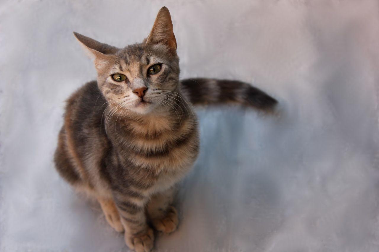 Beautiful stock photos of cute, Active, Animal, Balanced, Cat