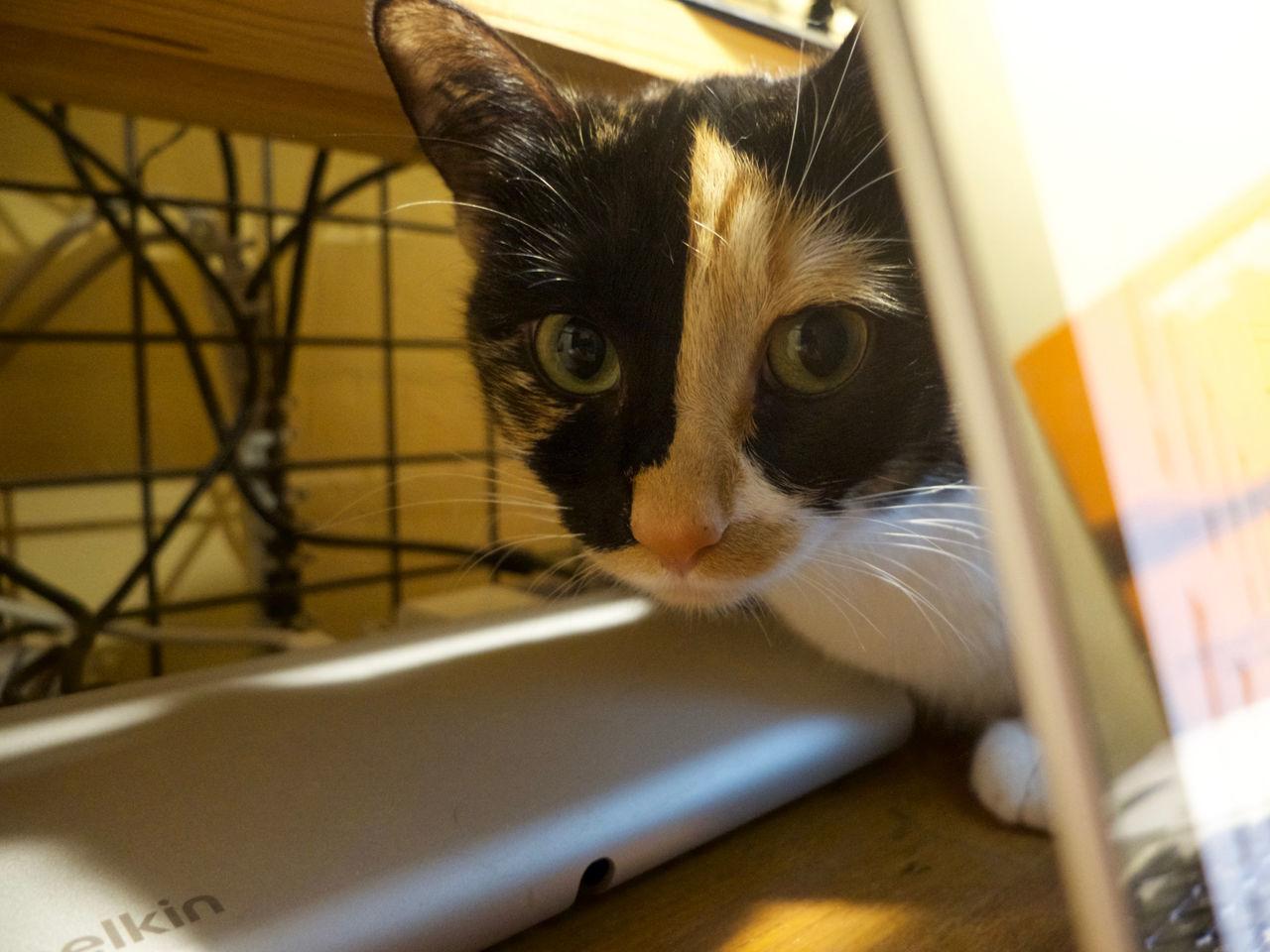 Animal Themes Cat Domestic Cat Feline One Animal Regard