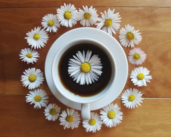 Kaffee Kaffeepause Kaffeetasse Kaffeekultur TheWeekOnEyeEM EyeEmBestPics EyeEm Masterclass EyeEm Best Shots Enjoying Life Nopeople Spring Flowers Delicate Flowers Details Of Nature Still Life Photography Onthetable Delicate Beauty Stillife StillLifePhotography Springtime Selective Focus Enjoying The Moment