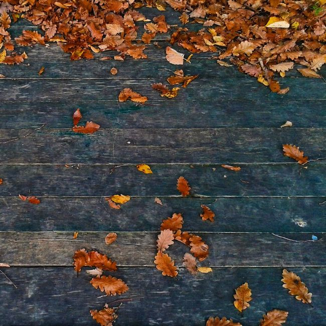 Fallen leaves on pier on lake Vidara. Autumn Backgrounds Blue Change Colors Conceptual Contrast Day Fall Fall Colors Fall Leaves Falling Leaf Leaves Nature No People Orange Color Outdoors Palette Square Squareinstapic Vivid Colours