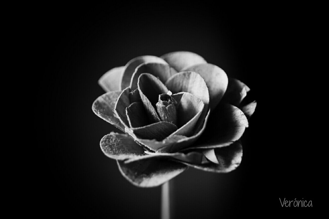 Flowerporn Luz Y Textura Black And White Creative Light And Shadow