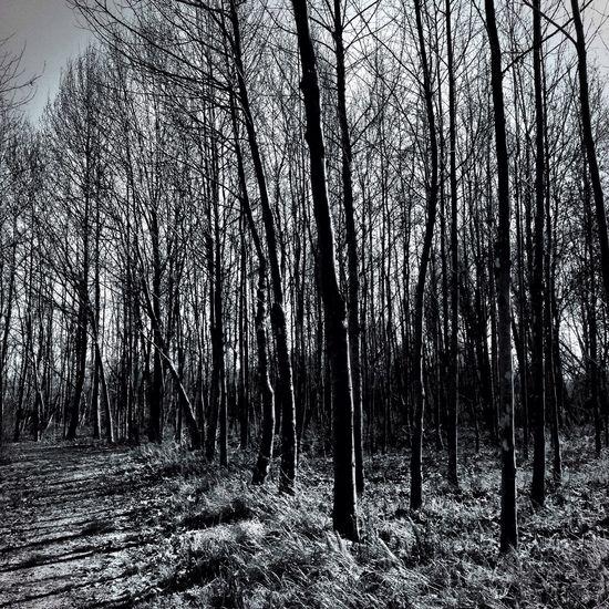 Blackandwhite Nature Trees