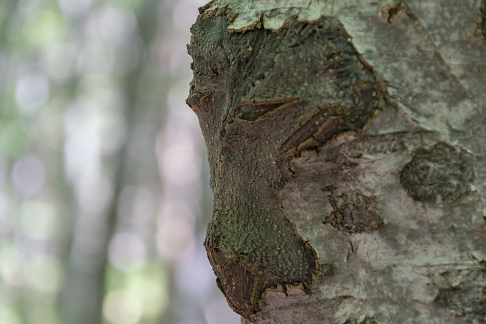 Beauty In Nature Close-up Day Nature No People Outdoors Textured  Tree Tree Stump Tree Trunk Vitosha Mountain Sofia, Bulgaria Wood - Material