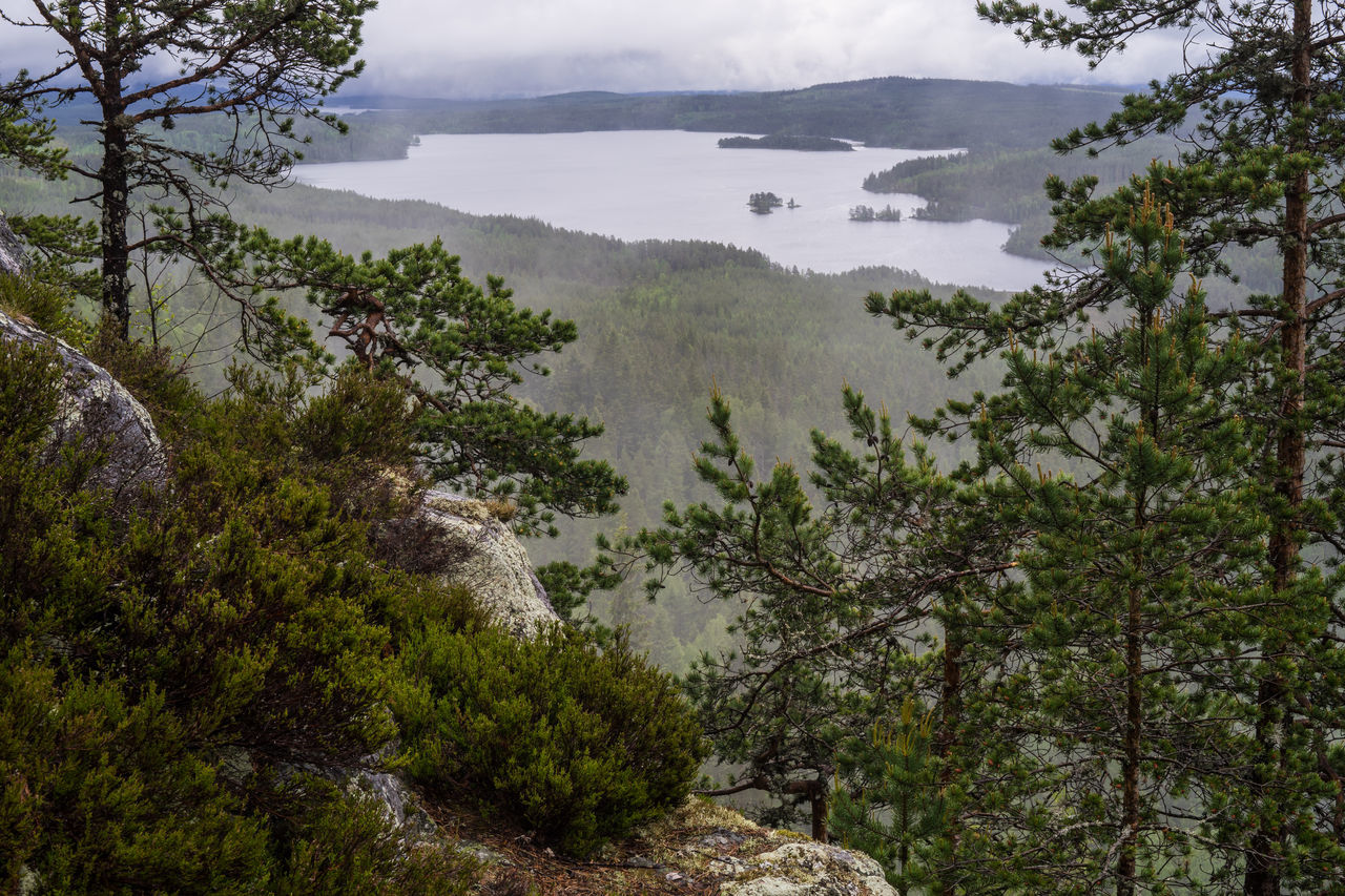 Rainy view from the outpost Ärtknubben in Dalarna, Sweden Beauty In Nature Dalarna Dalecarlia Fog Forest Green High Angle View Lake Landscape Mist Mountain Nature Northern Europe Outpost Rain Relaxing Remote S Scandinavia Tranquil Scene Tree Valley Water WoodLand ärtknubben