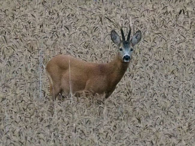 Deer Animals In The Wild Animal Themes Animal Wildlife Mammal One Animal Nature No People Young Animal Portrait Day Outdoors