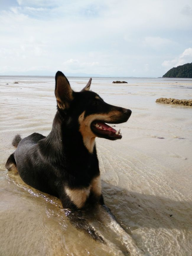 One Animal Animal Themes Pets Domestic Animals Dog Sea Water Beach Mammal Tranquil Scene Tranquility Shore Sky Relaxation Animal Head  Zoology Calm Animal Nature Curiosity