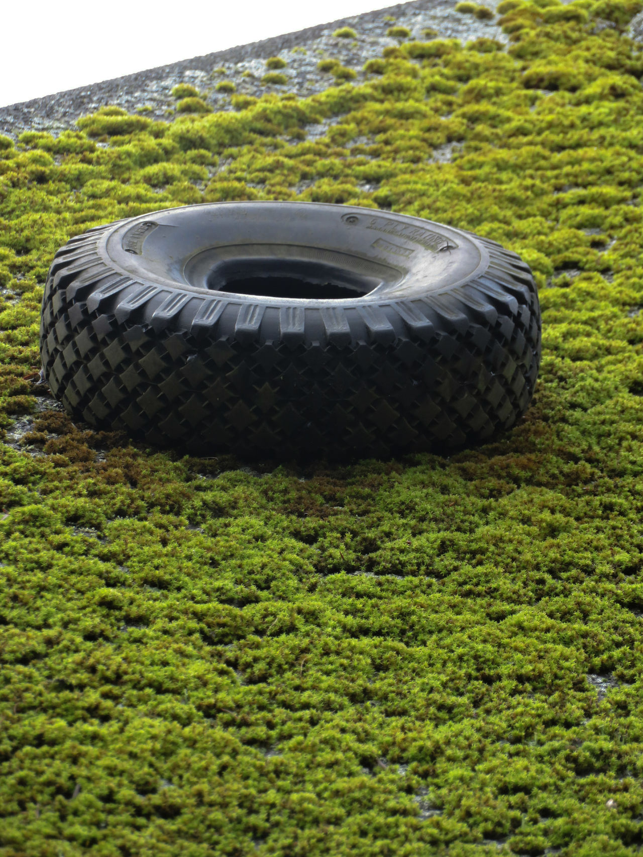 Nature Moss Rooftop Tire Close-up Outdoors Green Color