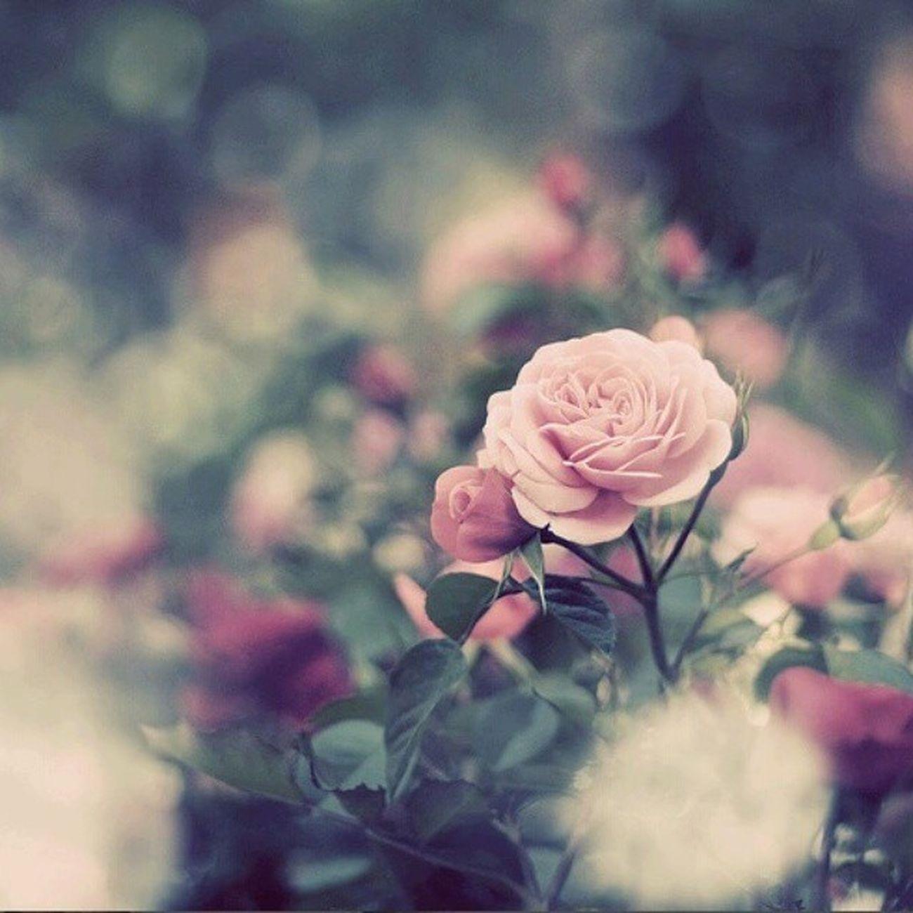 8 mart münasibeti ile bütün qadınları tebrik edirem.. Nadya ❤ Nermin bayramınız mübarek 😊 Nicatvsziyad