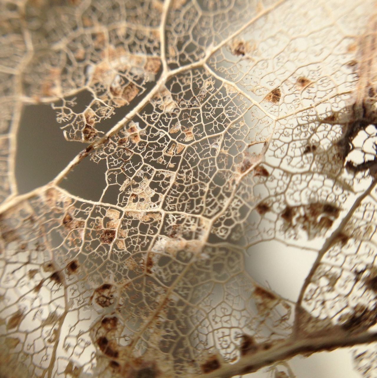 Beautiful stock photos of leaf, Backgrounds, Day, Extreme Close-Up, Full Frame