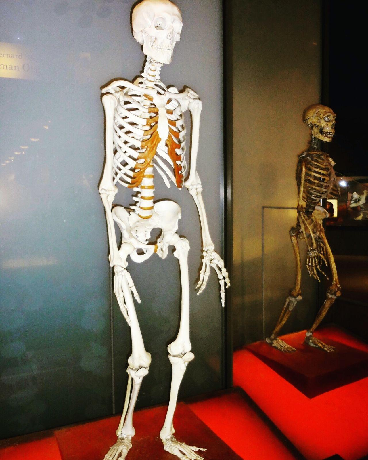 Human Skeleton Human Bone Indoors  Human Skull Bone  People Day museum of wax in DC