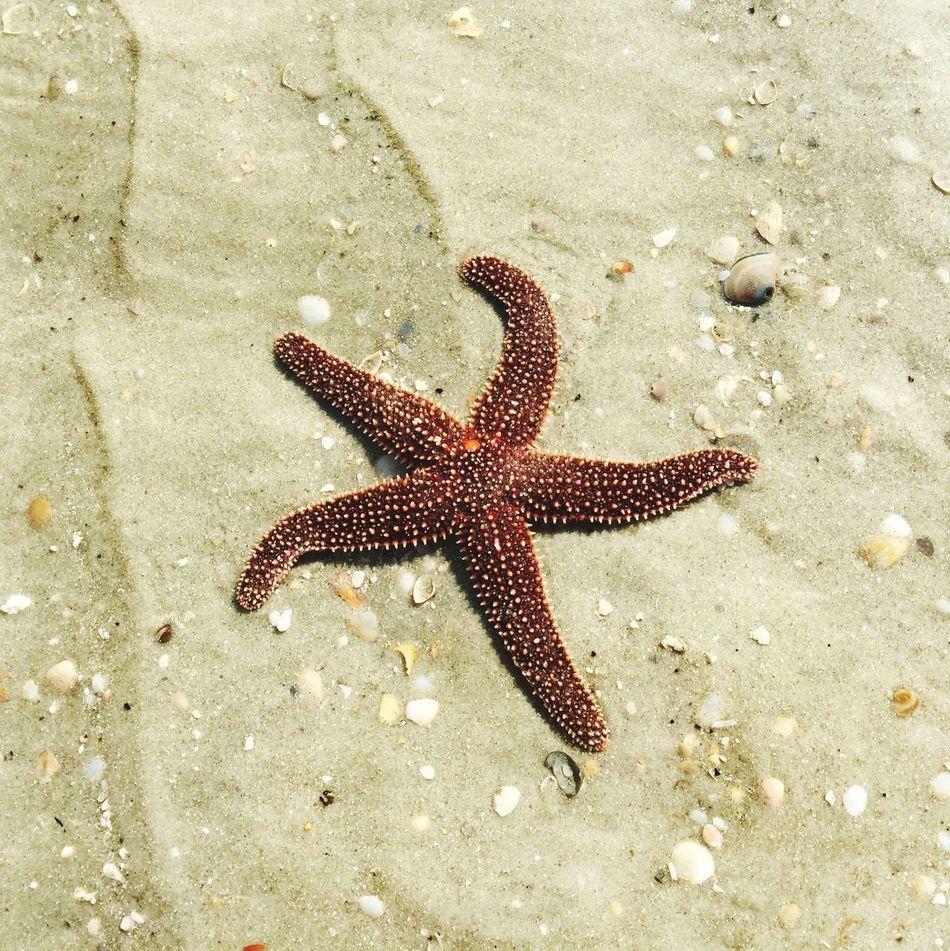 Beautiful stock photos of starfish, Animal Themes, Animals In The Wild, Atlantic Beach, Beach