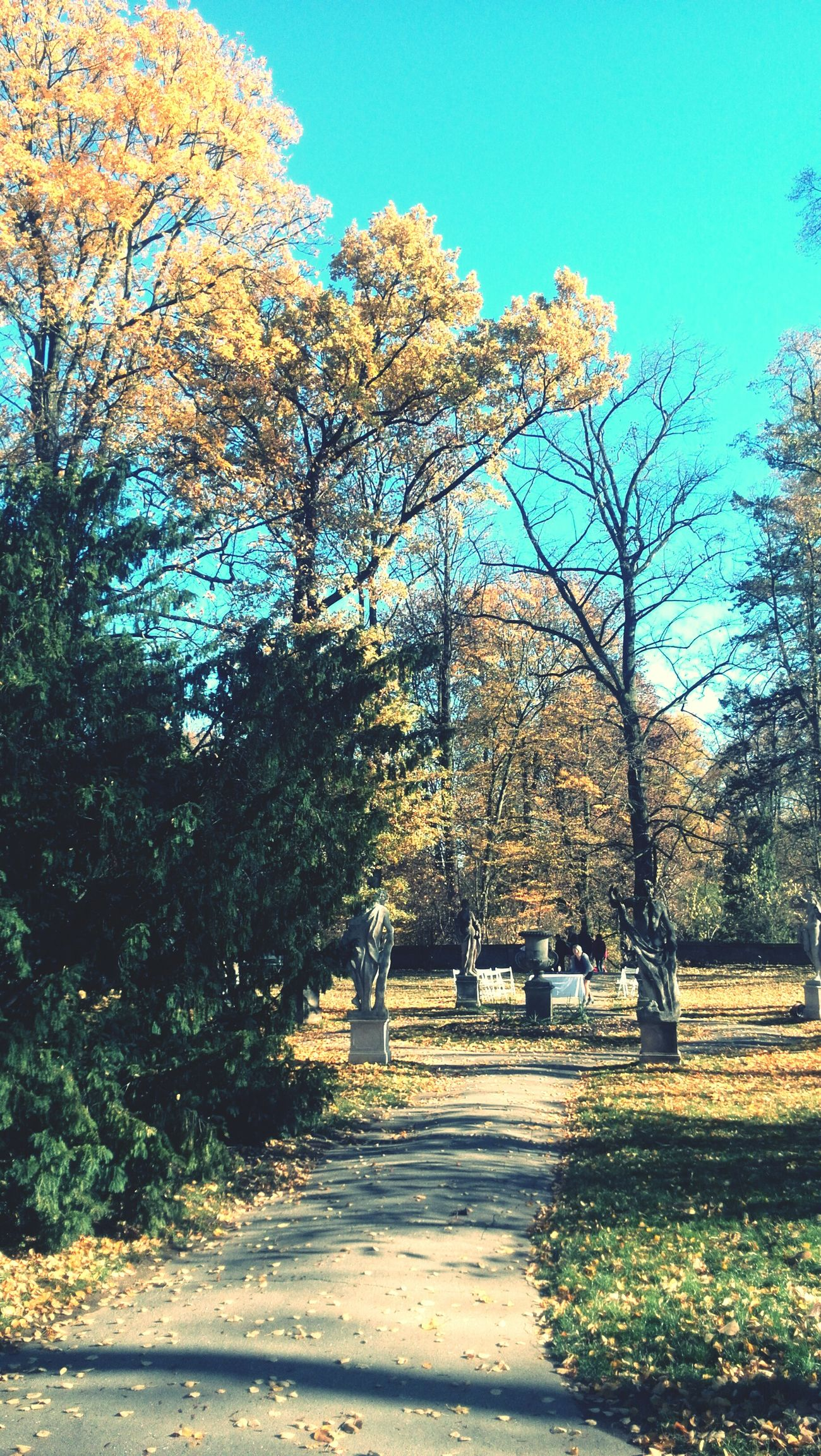 Autumn Colors Orange Color Blue Sky Park Relax Konopiště  First Eyeem Photo Czech Republic Czech Benesov Podzim