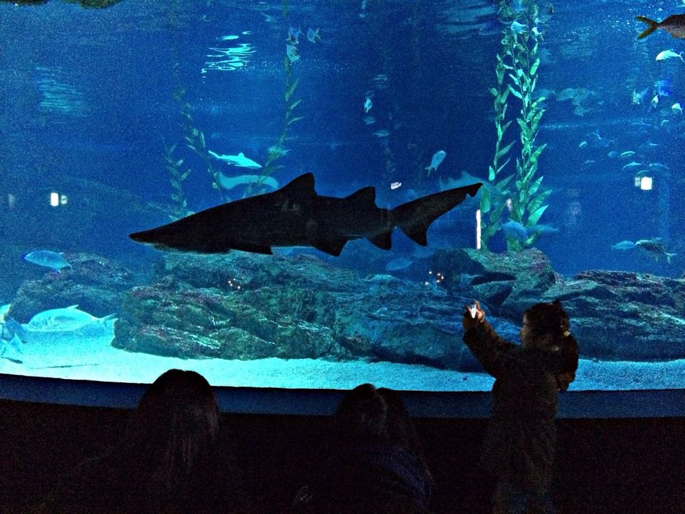 sharks pool Shark