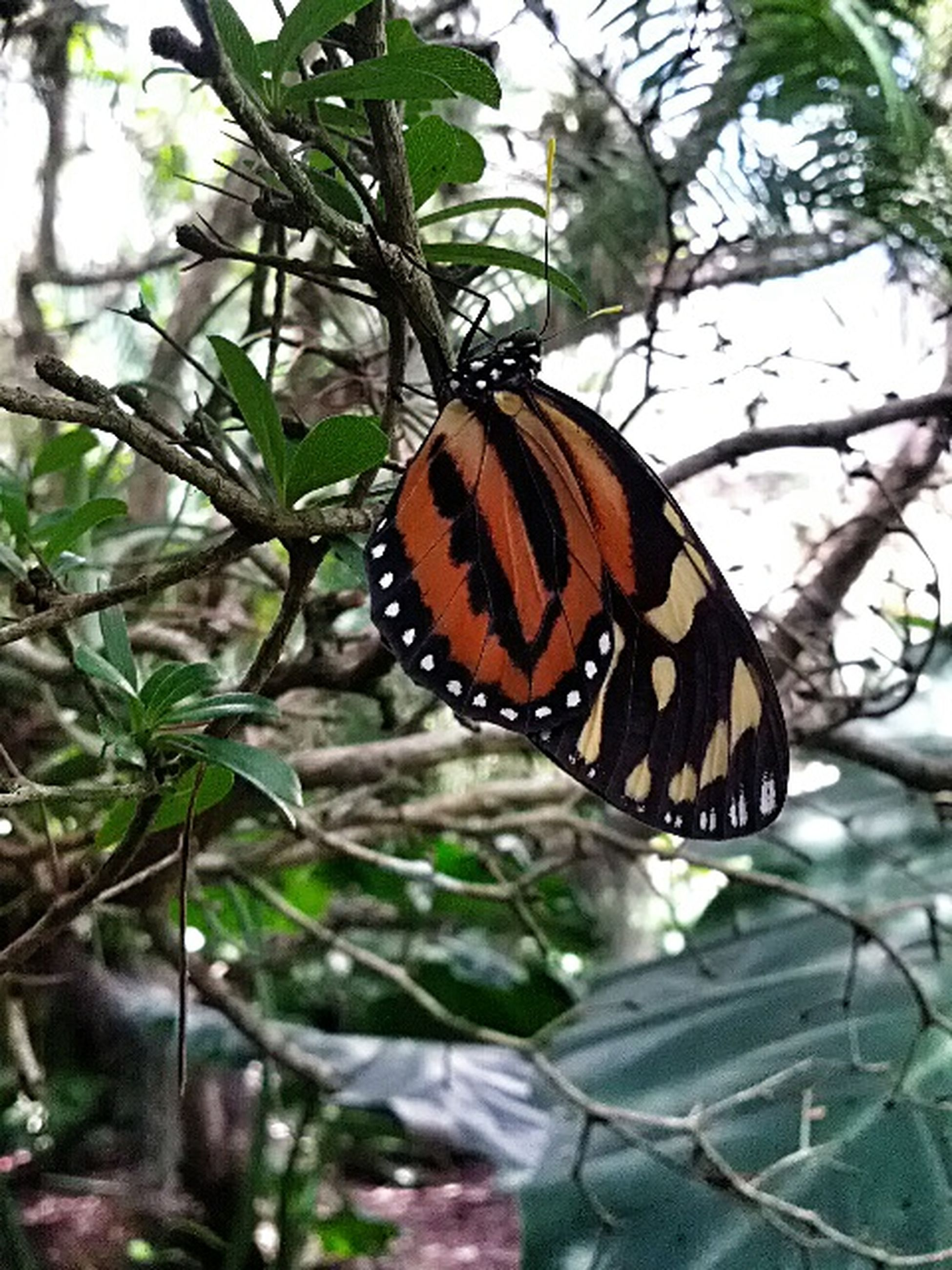 butterfly - insect, one animal, insect, animal markings, butterfly, animal themes, animals in the wild, leaf, wildlife, focus on foreground, close-up, natural pattern, plant, nature, beauty in nature, growth, orange color, fragility, outdoors, day