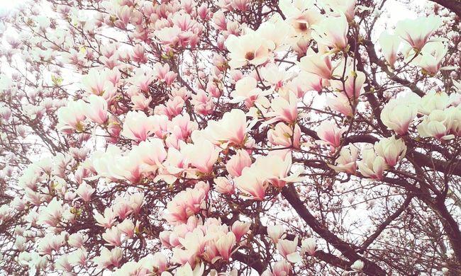 Baum Mit Blumen