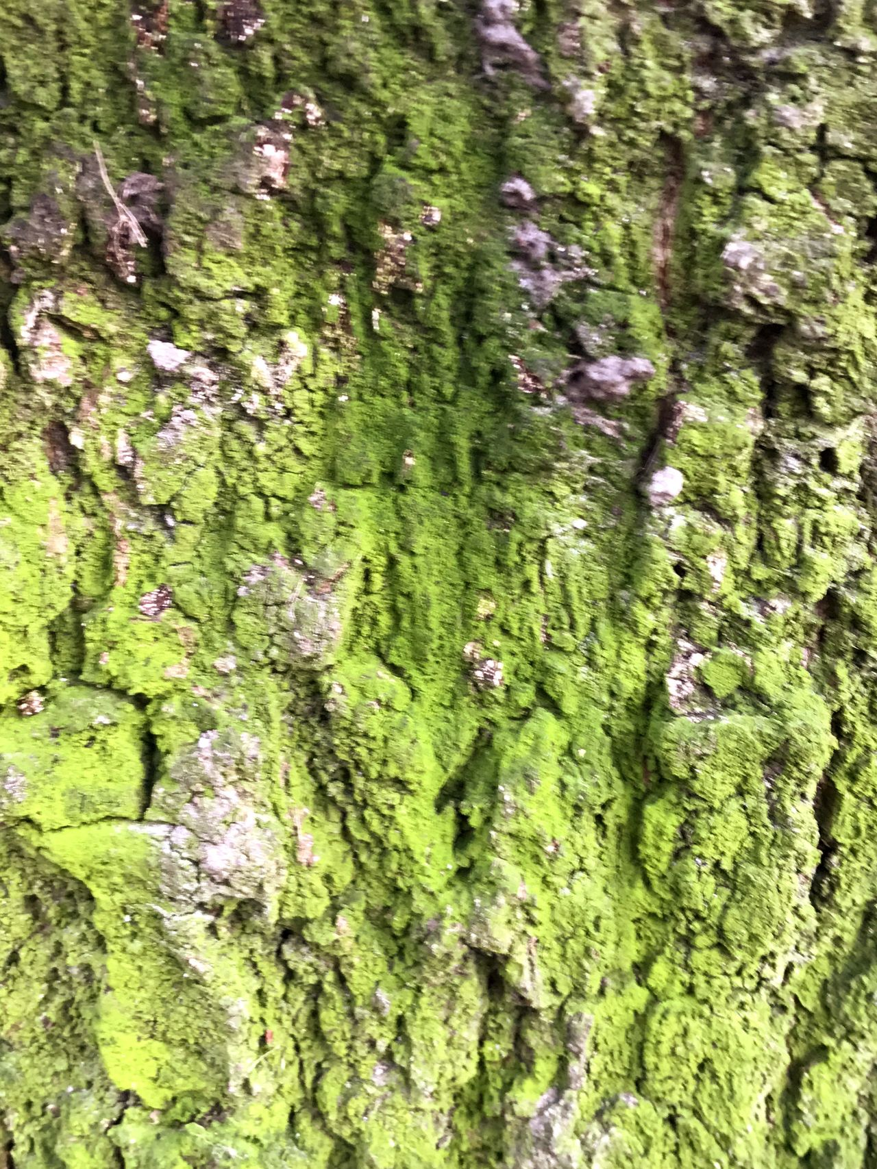 Green Color Full Frame Nature Outdoors Close-up Nature_collection Nature Photography Naturelovers Moss Mossy Tree Moss & Lichen Moss-covered Moss Covered Tree Natural Pattern Nature Collection