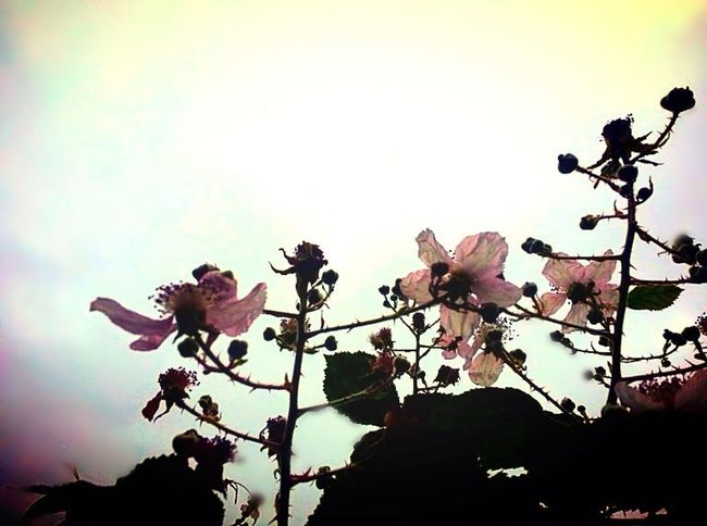 Flowers Skylight EyeEm Nature Lover Pink