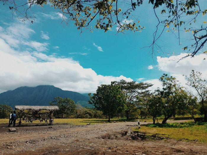 Little Africa in Java - Baluran, East Java, Indonesia Nature Bestshot Nature Photography Landscape Landscape_photography Hello World INDONESIA Trees And Nature Enjoying Life