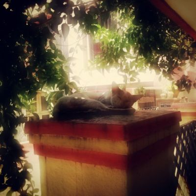 A peaceful nap with not a care in the world. .SummerMustHaves