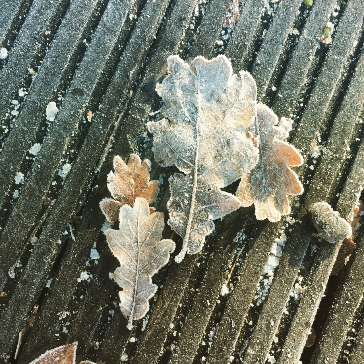 Leaf Outdoors Close-up Cold Temperature Frosty
