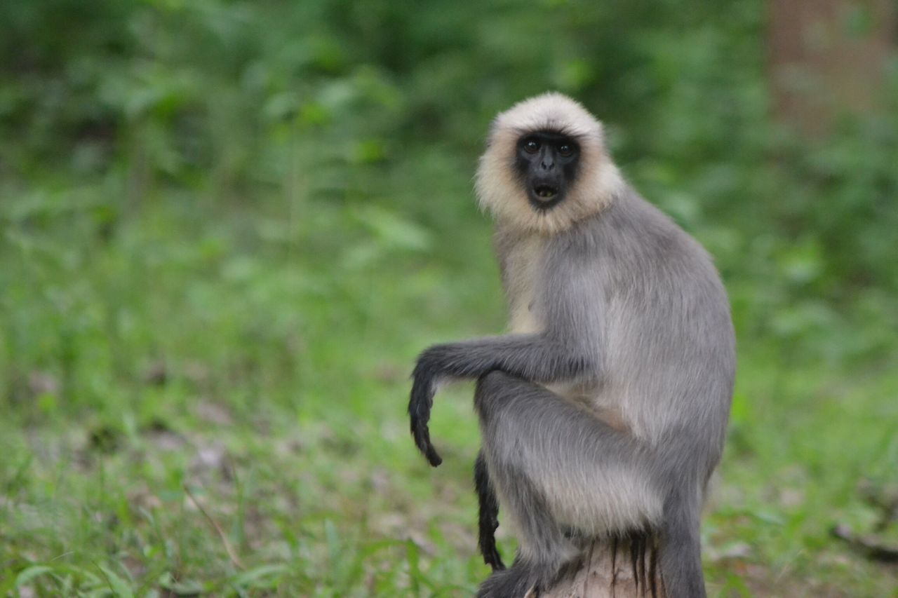 Gray Langurs Taking Photos EyeEm Team EyeEm EyeEm Nature Lover Wayanad Photography